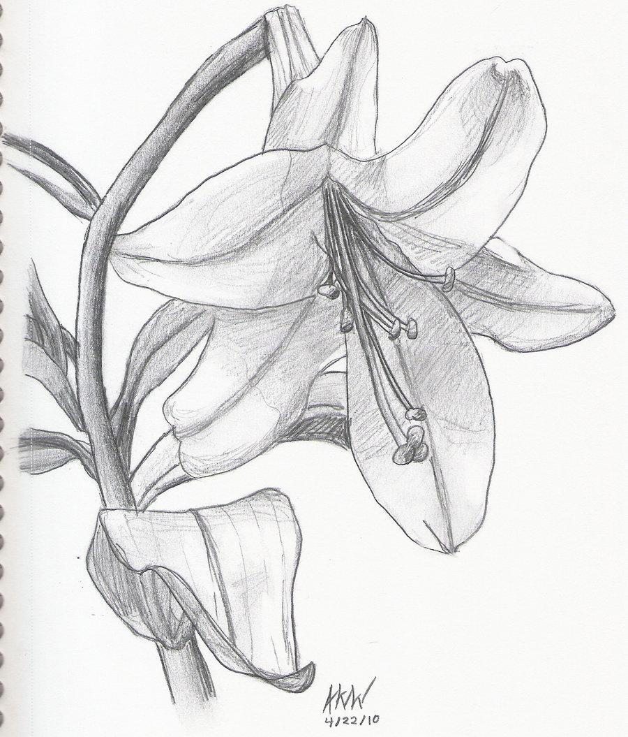 900x1055 Lily