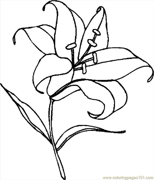 650x758 Lily Coloring Page