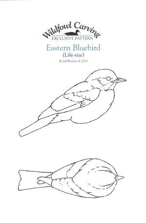 300x458 Eastern Bluebird Coloring Page Also Mountain Bluebird Coloring