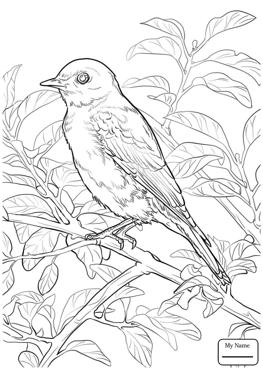 1040x1469 Bluebird Birds Eastern Bluebird Rose New York State Bird