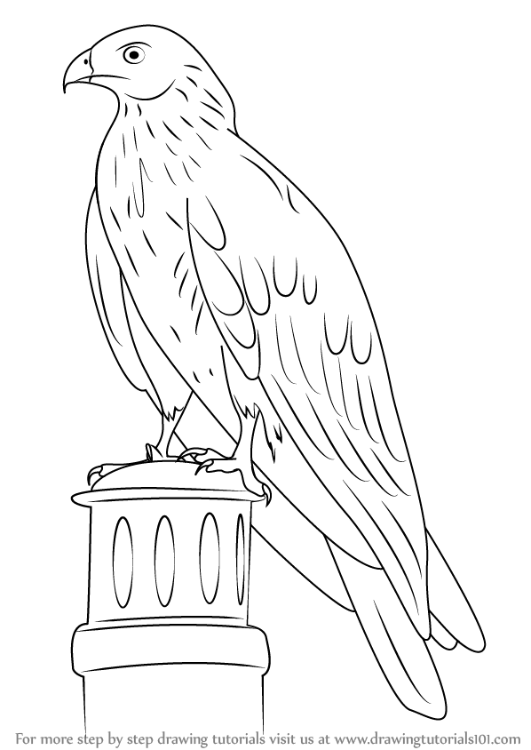 598x844 Learn How To Draw A Black Kite (Birds) Step By Step Drawing