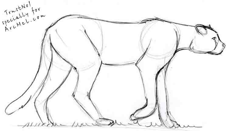 Easy Cheetah Drawing at GetDrawings | Free download