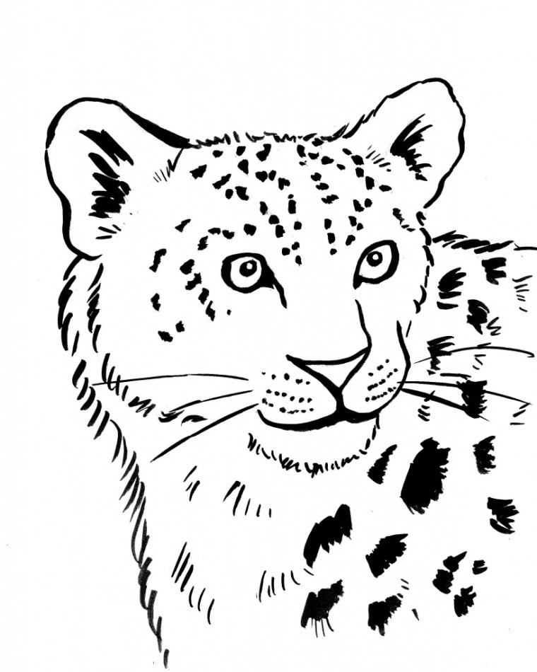 animal jam animals coloring pages snow leopard | Easy Cheetah Drawing at GetDrawings.com | Free for ...
