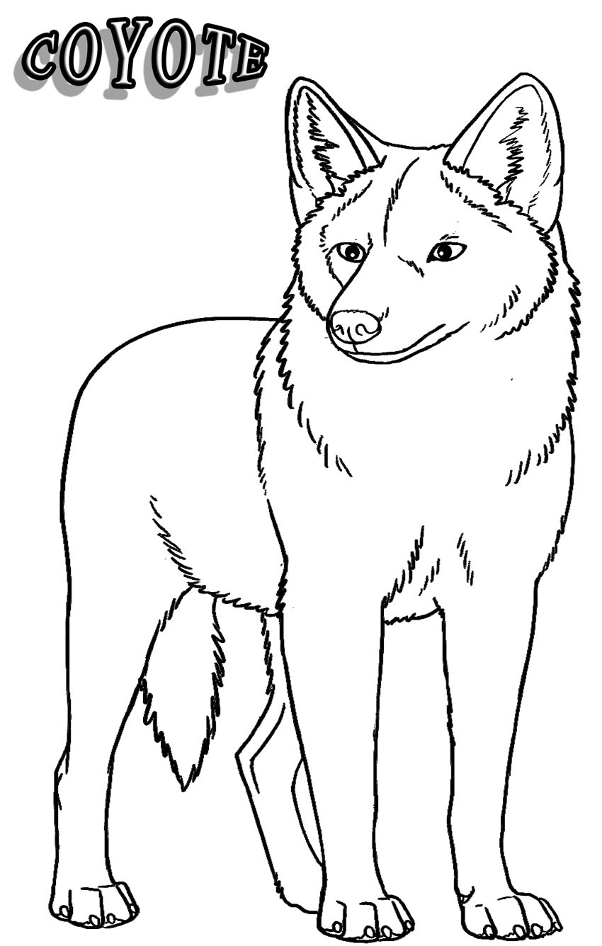 850x1336 Coyote Animal Coloring Pages Coyote Animal Coloring Pages Coyote