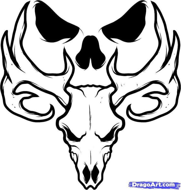 736x775 Easy Deer Head Drawing