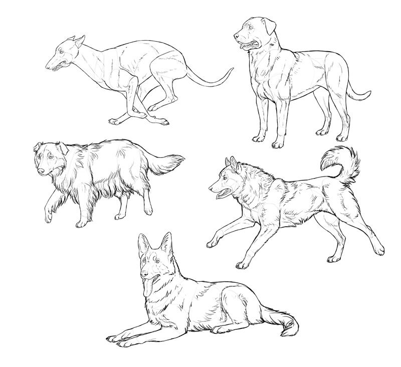 Easy Dog Drawing Steps At Getdrawingscom Free For Personal Use