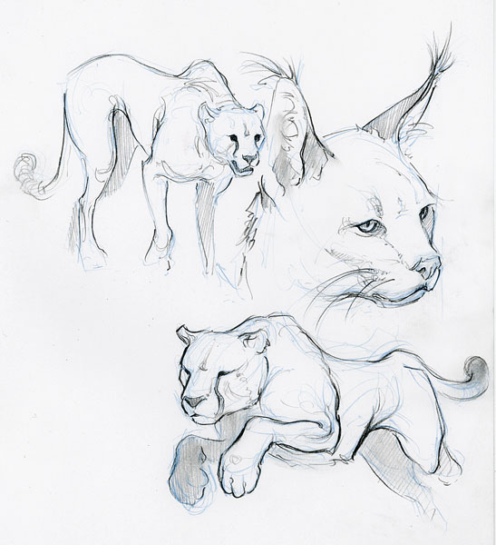 547x600 Animal Sketches