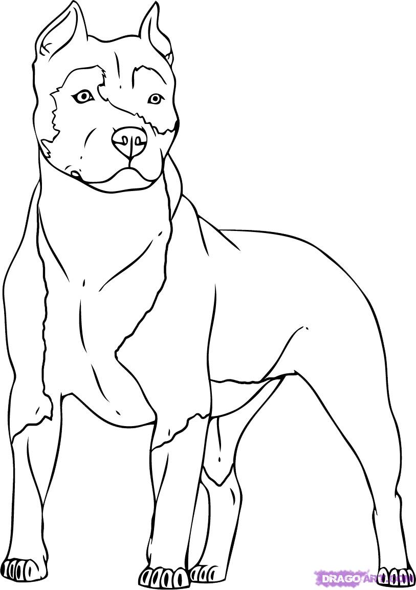813x1152 Dog Color Pages Printable Coloring Puppies PitBull Dogs