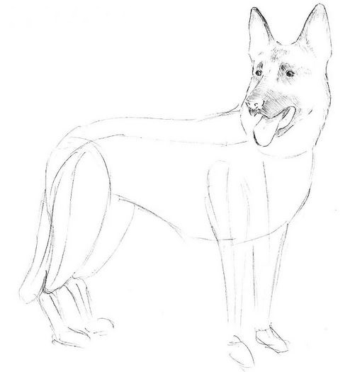 494x525 How To Draw A Dog