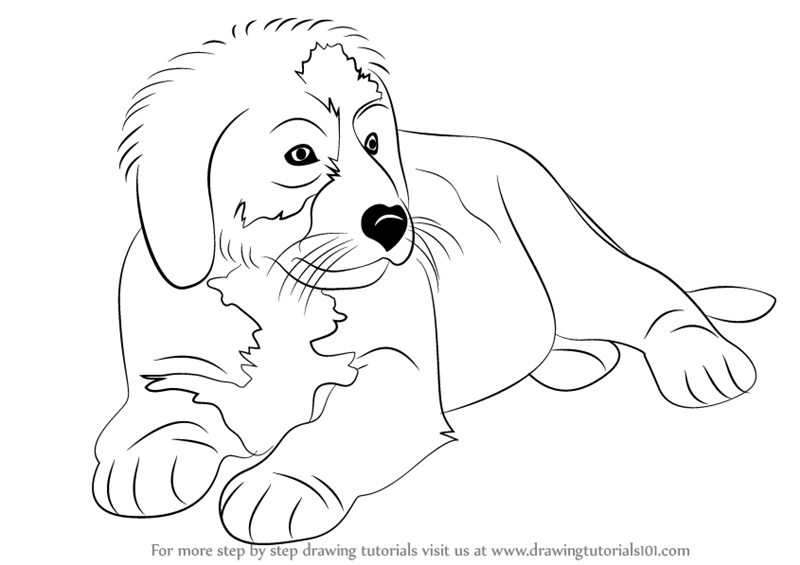800x565 Learn How To Draw A Bernese Mountain Dog (Other Animals) Step By