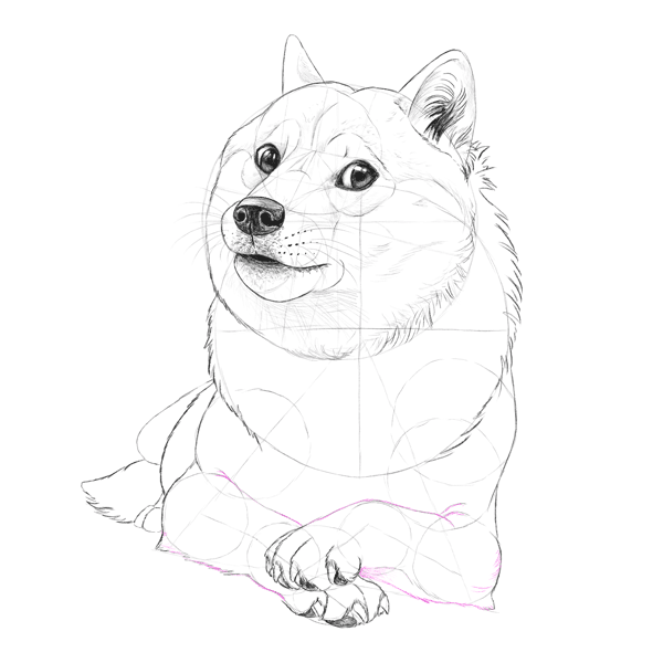 600x600 Such Tutorial, Many Fun How To Draw Doge!