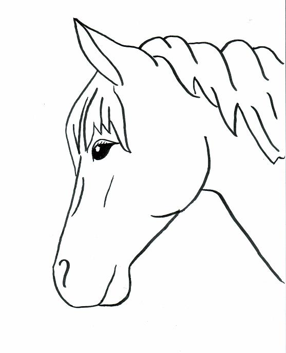 557x686 horse outlines to trace horse drawings to trace horses easy