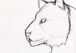 easy drawing ideas for beginners step by step animals at getdrawings