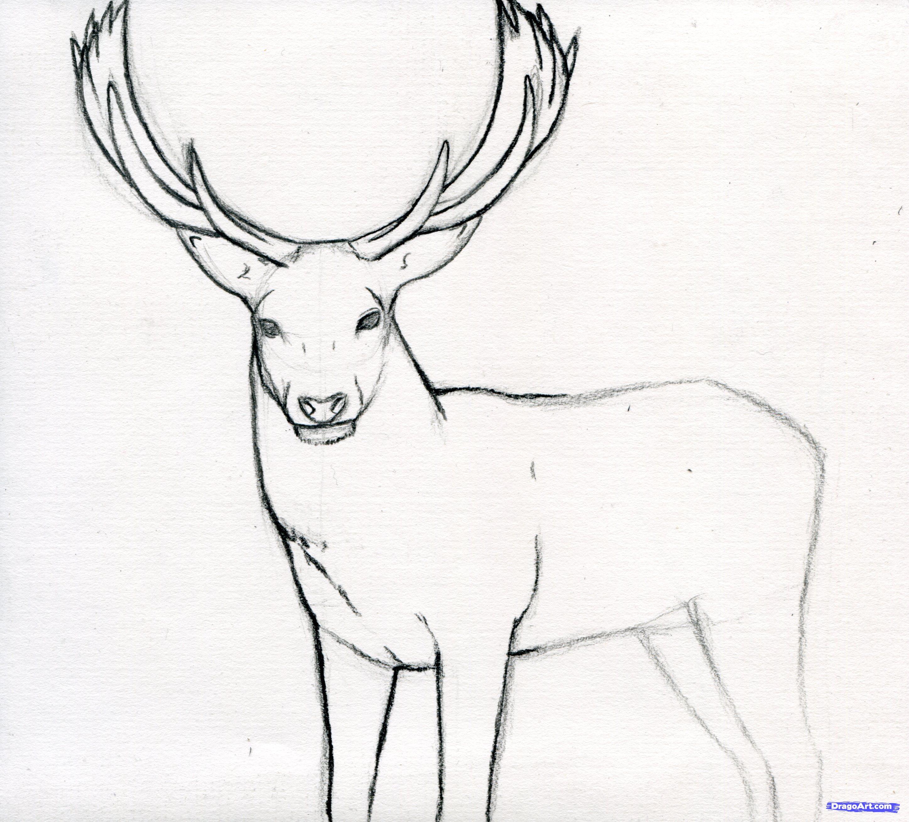 2894x2618 Amazing And Easy Drawings Amazing Easy Deer Buck Drawings 53