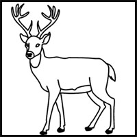 Easy Drawing Of A Deer At Getdrawings Com Free For Personal Use