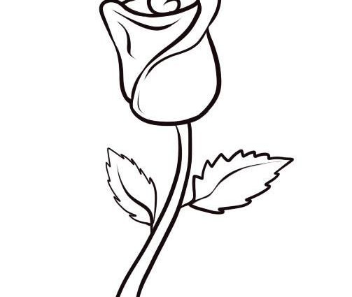 503x425 pics of easy to draw roses