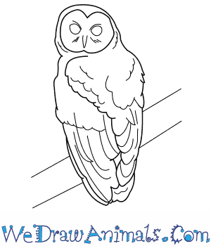 300x350 How To Draw A Spotted Owl