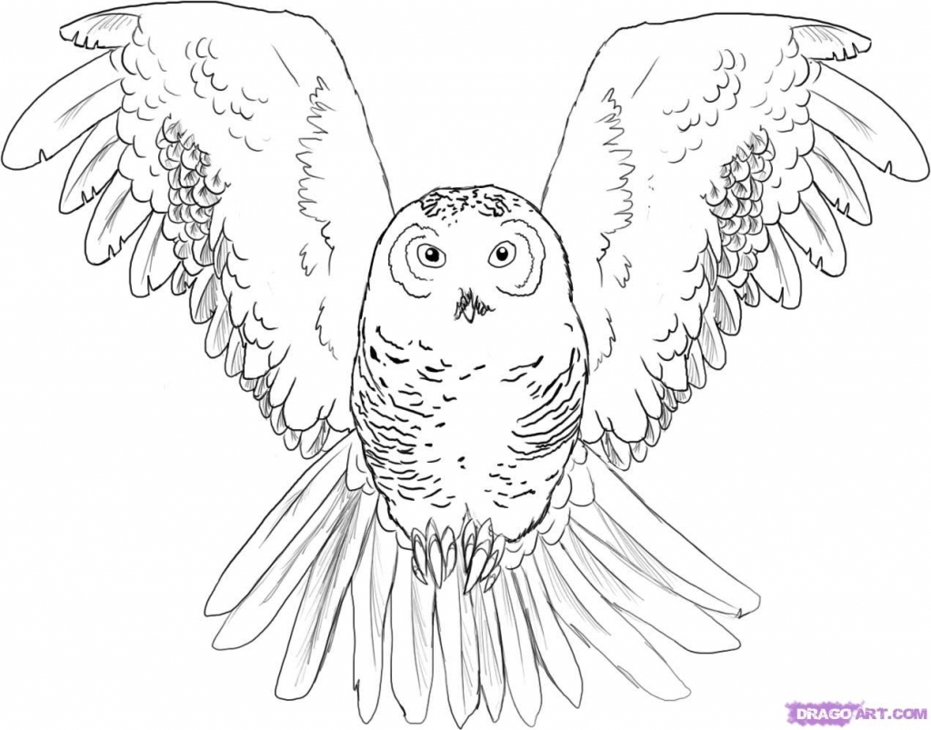 1024x803 Owl Drawings Easy How To Draw A Snowy Owl On Snowy Owl