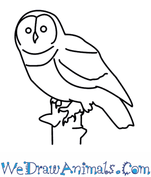 300x350 How To Draw An Owl