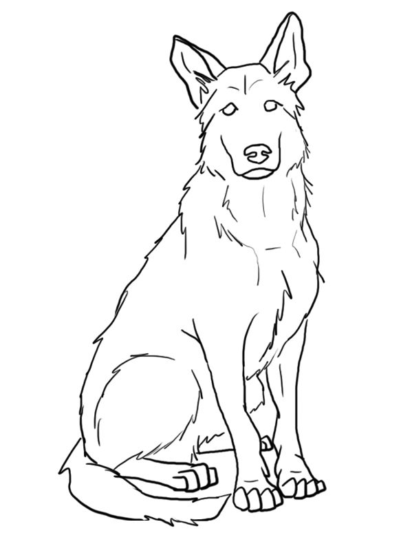 583x790 Collection Of Collie Dog Black White Line Art Tattoo