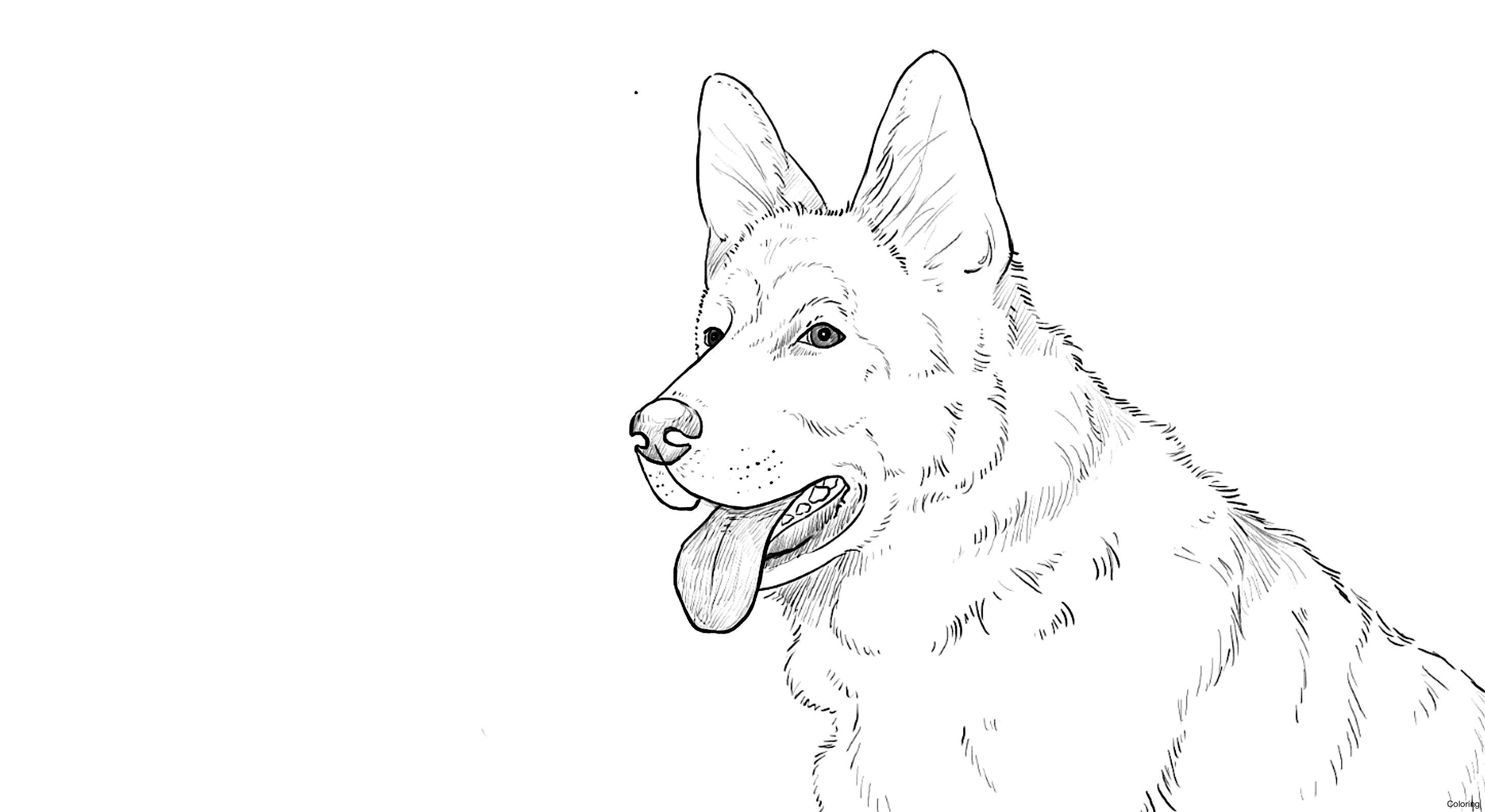 2892x1582 German Shepard Drawing Coloring Shepherd Puppy 14f Easy Drawings