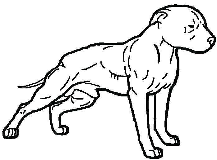 698x516 Pitbull Coloring Page Coloring Pages Full Size Of Coloring Easy