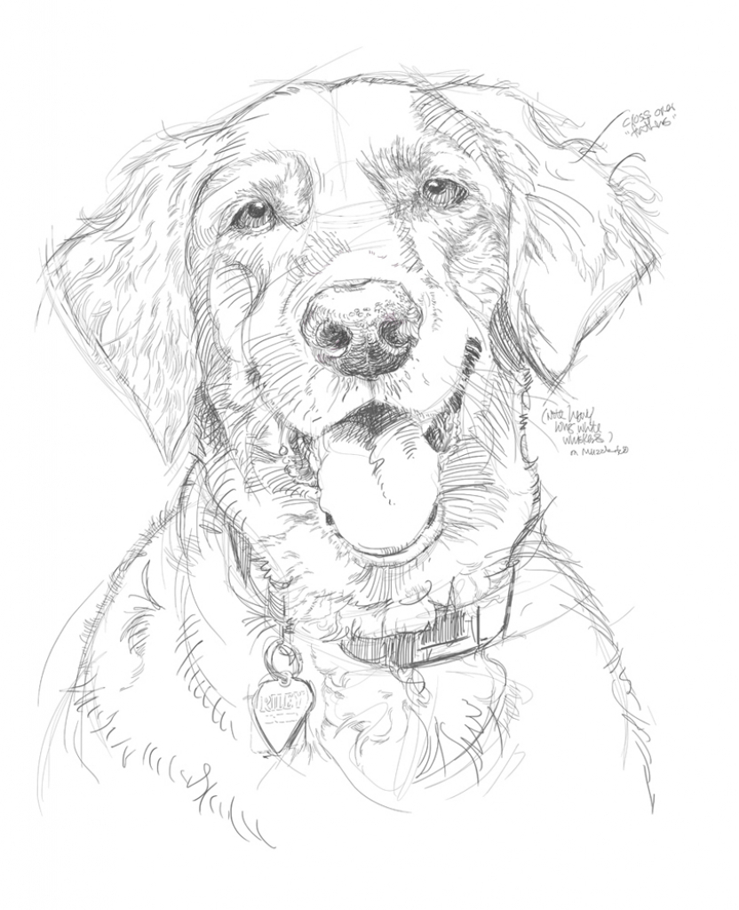 832x1024 Dog's Easy Pencil Drawing Best Easy Pencil Drawings
