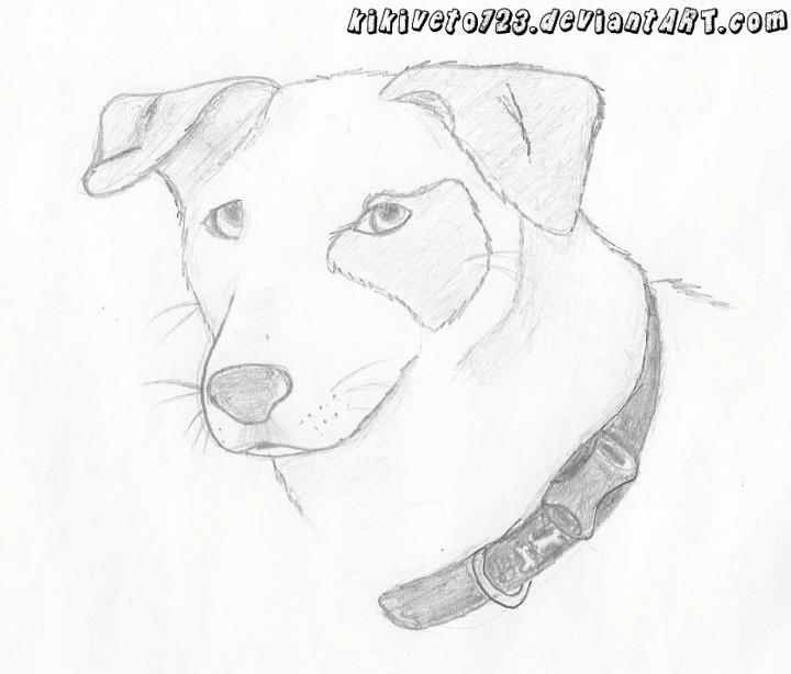 720x614 Dog Head Drawing By Ivixey
