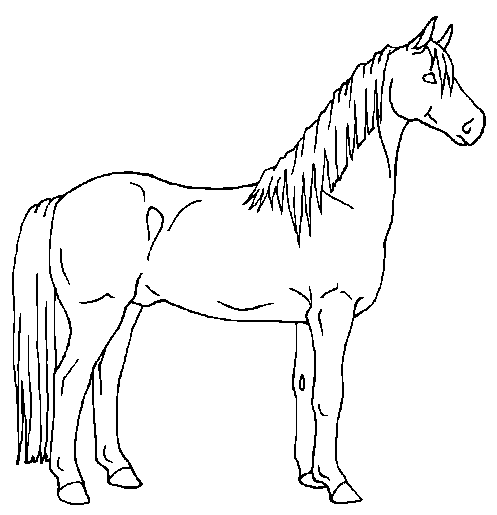497x515 Horse Standing Drawing Horse Standing On Two Legs Drawing