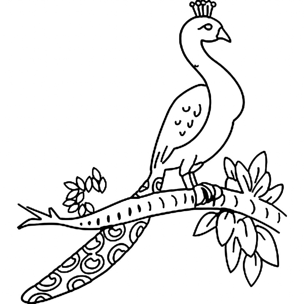 How to draw a peacock 20