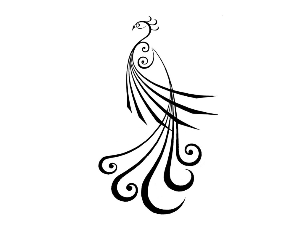 how to draw a feather step by step easy