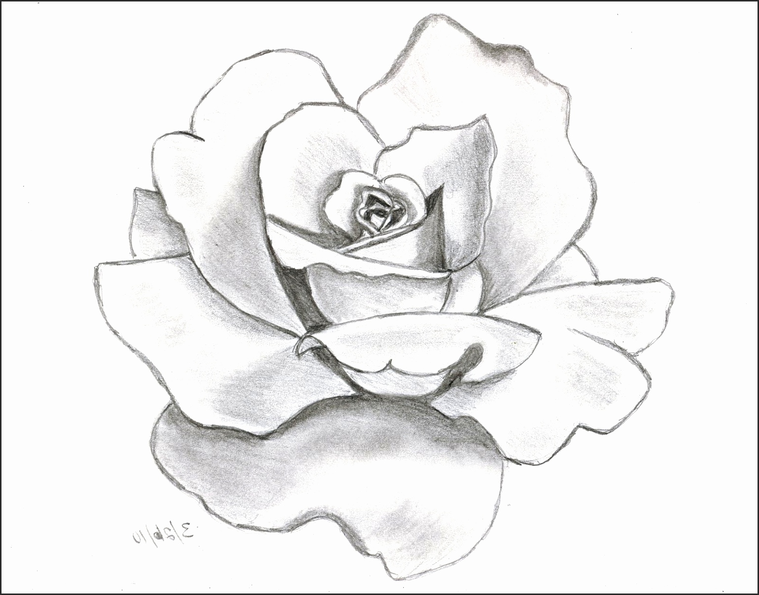 1536x1204 Easy Drawing Of Rose Fb2uz New Flower Drawing Rose Drawing A Rose