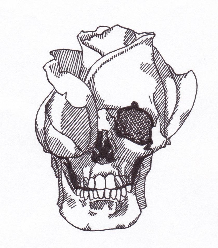 839x952 Skull Rose By Stehmdawg