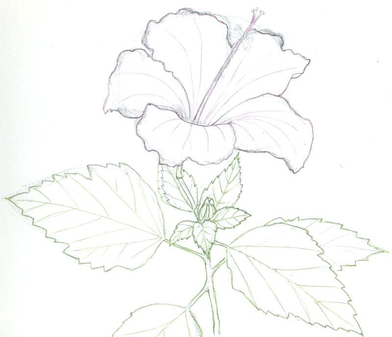 800x689 Garden Drawing Easy Flower Garden By On Easy Garden Drawing