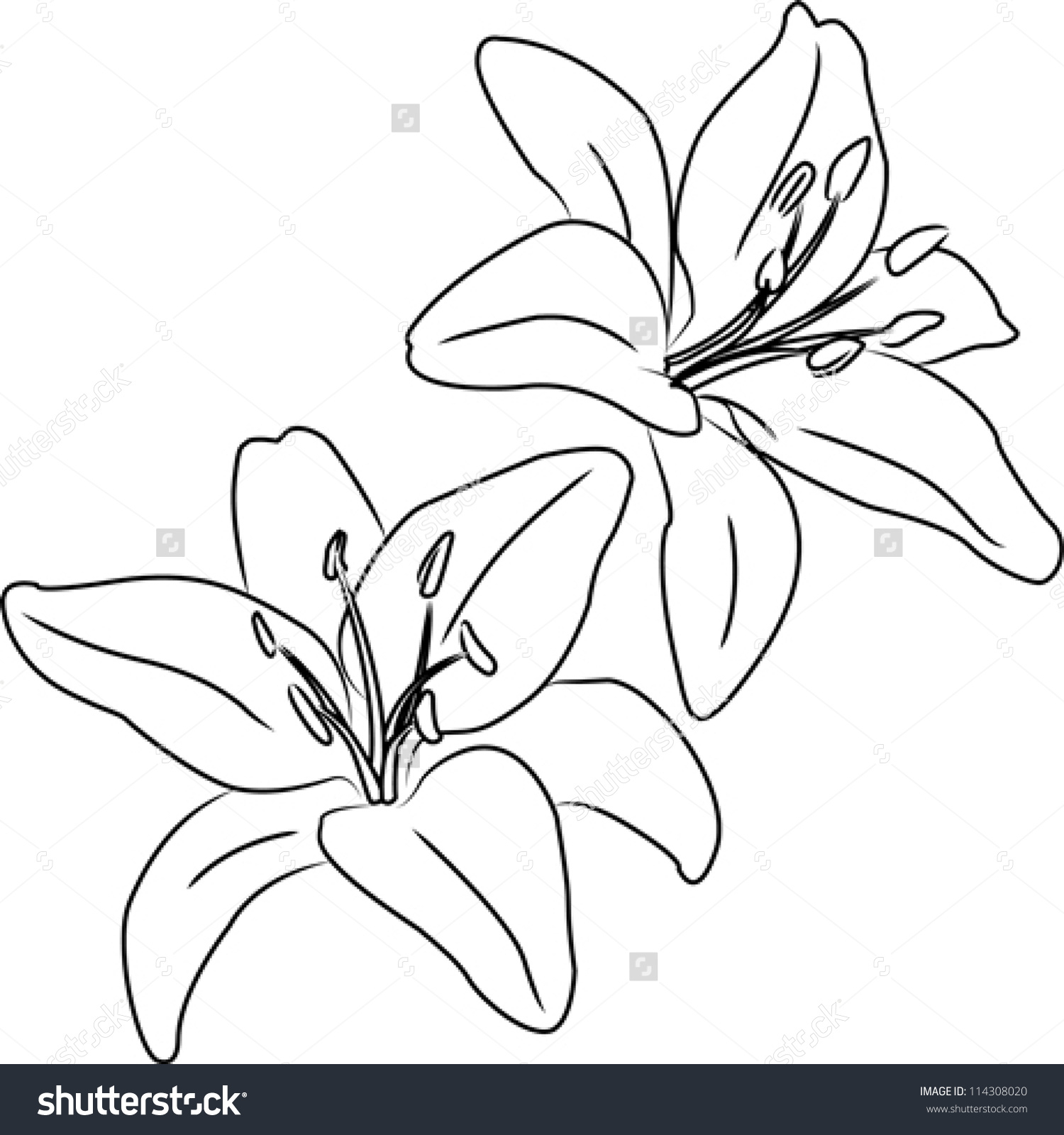 1500x1600 Flower Drawing Outline Outline Of Flowers For Drawing Eletragesi