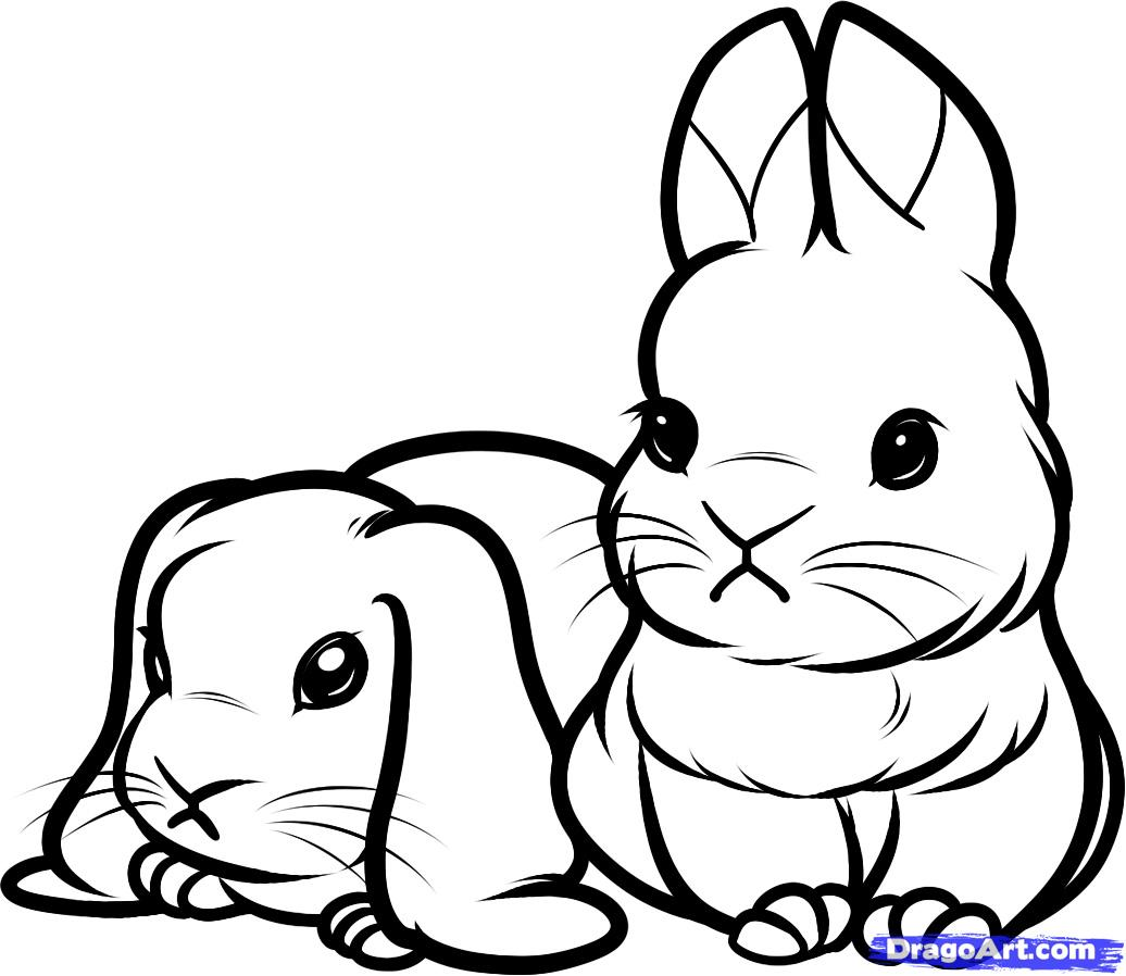 1036x898 How To Draw Baby Rabbits Step By Forest