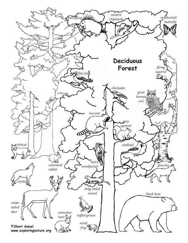 612x792 Draw A Deciduous Forest
