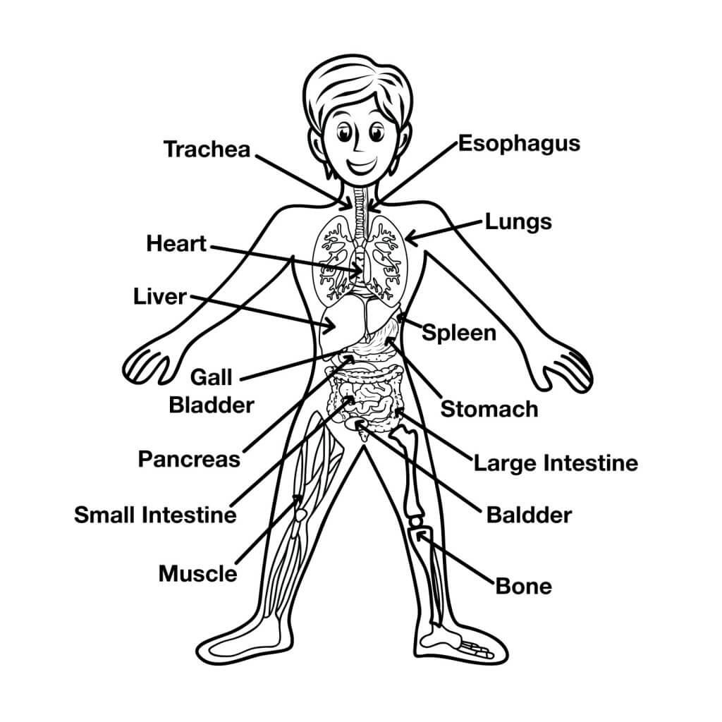 1024x1024 Fun Human Body Facts For Kids