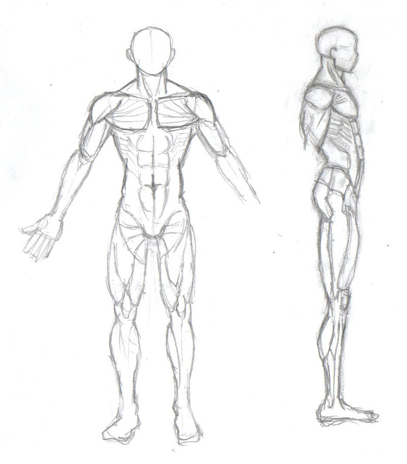 Easy Human Body Drawing At Getdrawings Free For Personal Use