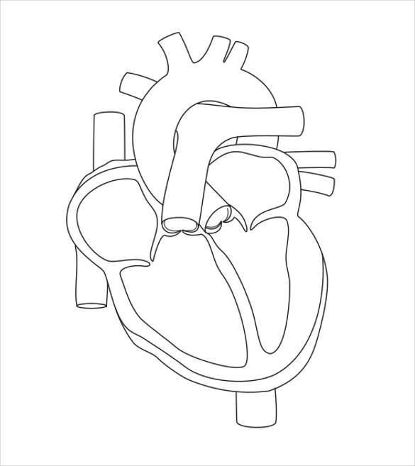 Simple Heart Diagram Unlabeled