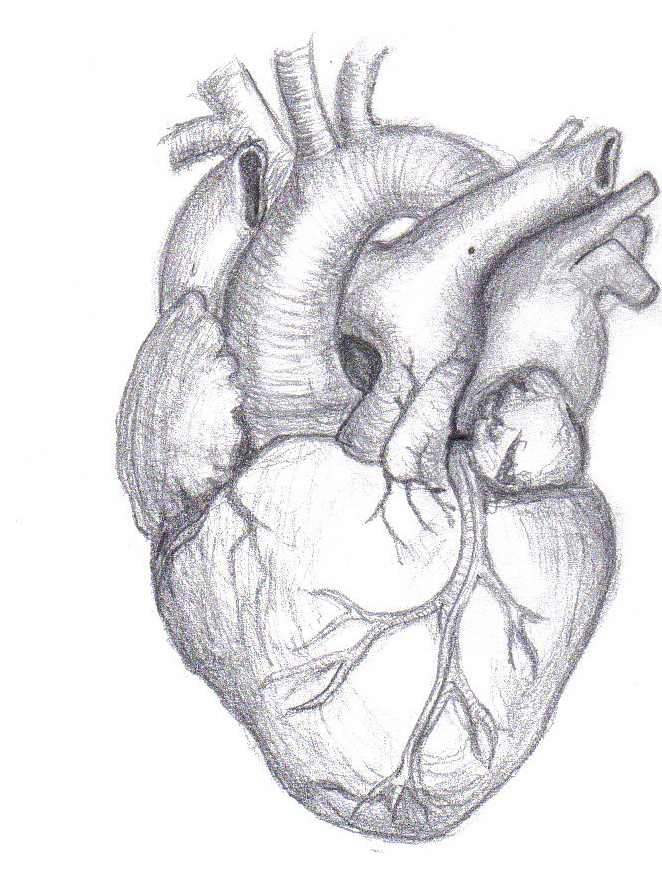662x895 Easy Human Heart Drawing