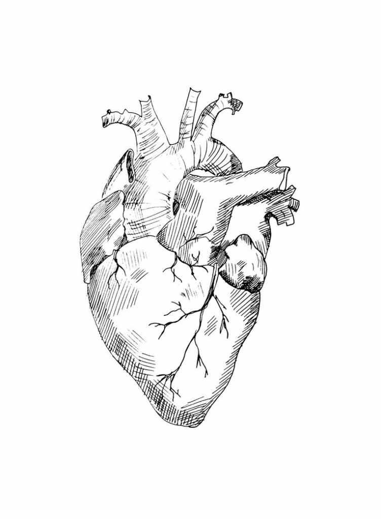 752x1024 Anatomical Heart Drawing