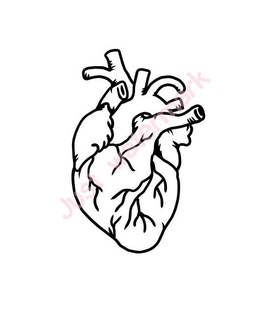 570x651 Human Heart Line Drawing Jpgsvg Real Hand Drawing