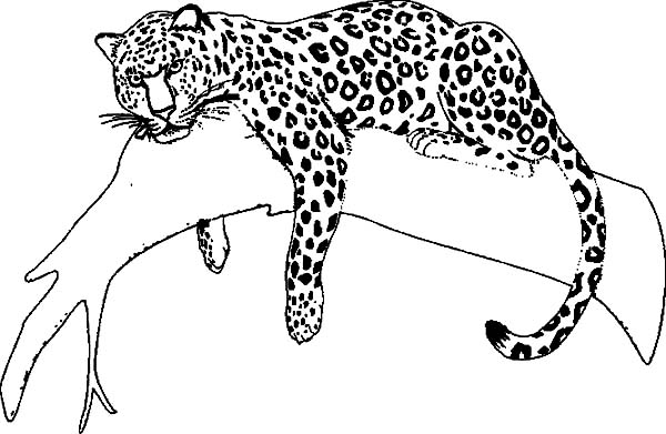 coloring pages jaguars - photo#36