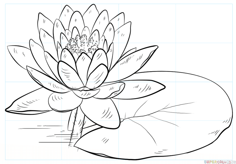 828x575 How To Draw A Water Lily And Pad Step By Step Drawing Tutorials
