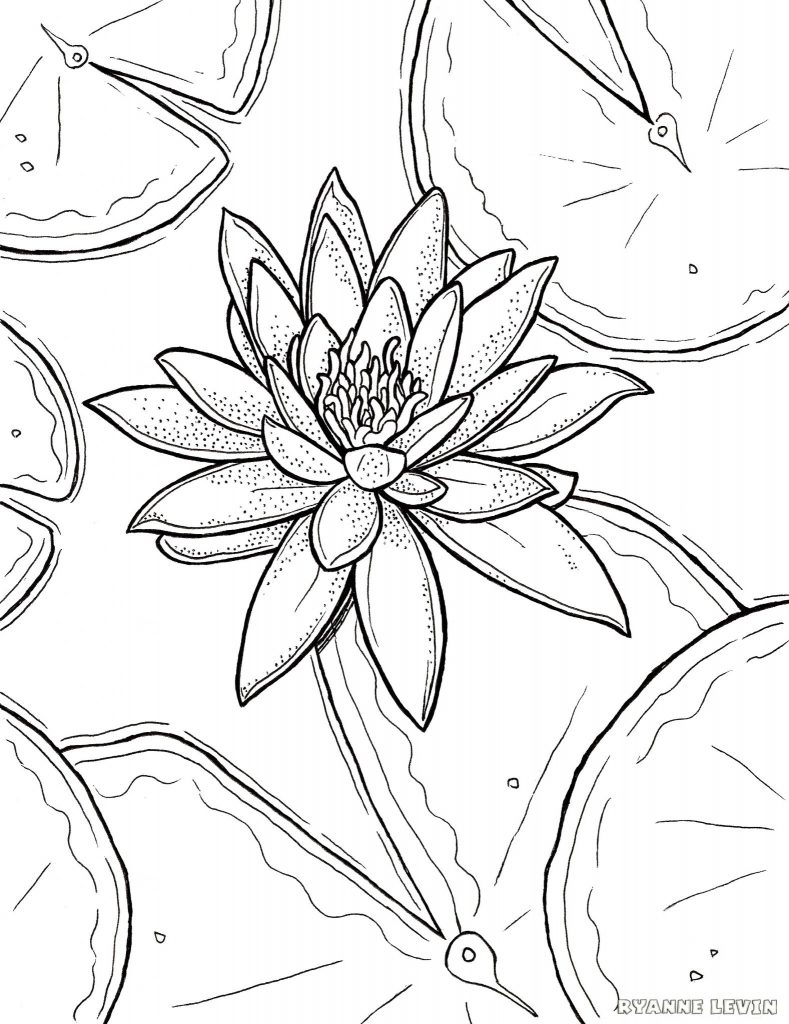 789x1024 Water Lily Coloring Page Crayon Action For Kids Flowers Frog Pad