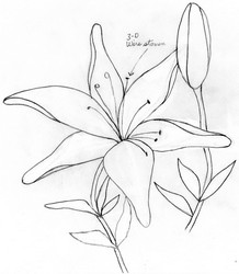 218x250 How To Draw A Lily Flower Step 4. Easy Lily Tattoo Drawing Youtube