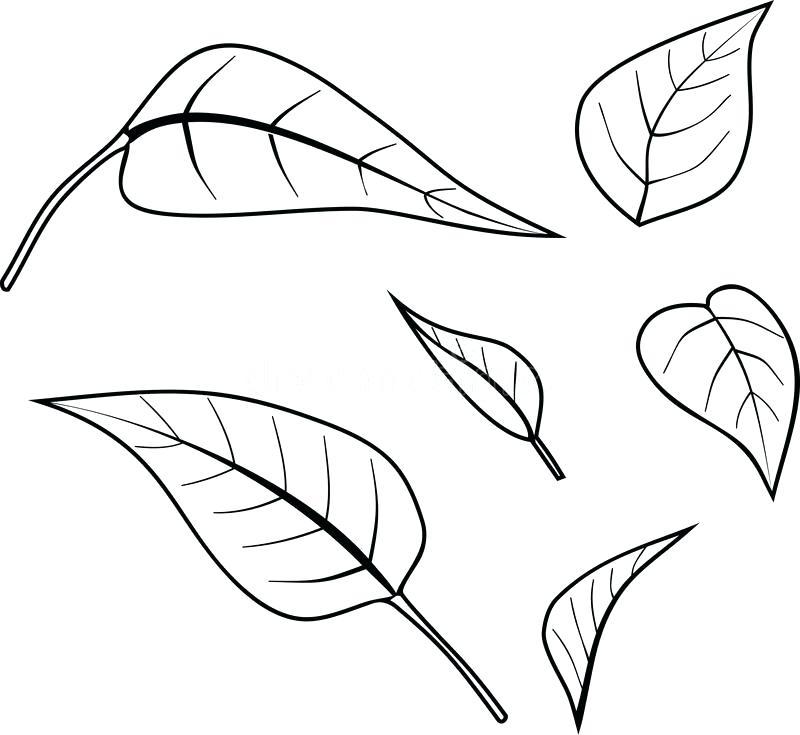 Easy Maple Leaf Drawing At GetDrawings