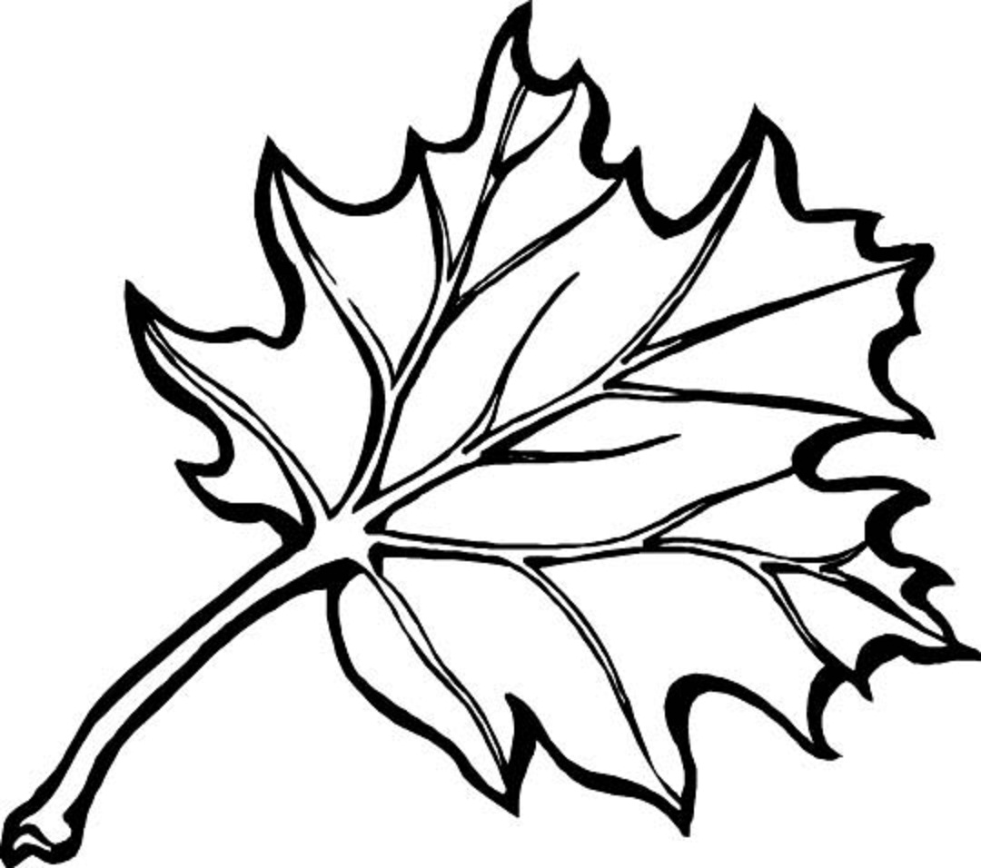 Easy Maple Leaf Drawing at GetDrawings.com | Free for personal use ...
