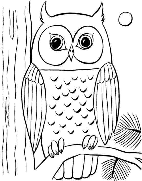 580x738 Coloring Pages Impressive Draw An Owl Cute